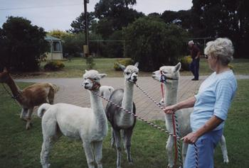 Yankalilla Locality List  Image . This photo sponsored by Alpaca Products - Retail Category.